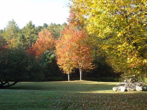 Fall yard (640x480)