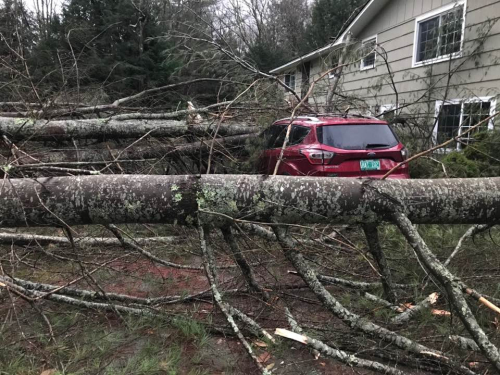 Tree down2
